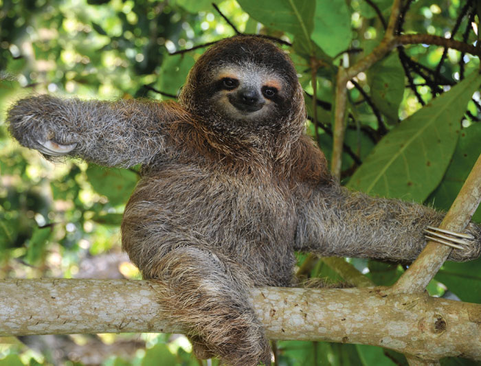 Hug a sloth in Costa Rica.  Actually, don't do that.