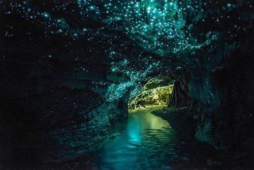 Glowworm cave near Auckland, New Zealand